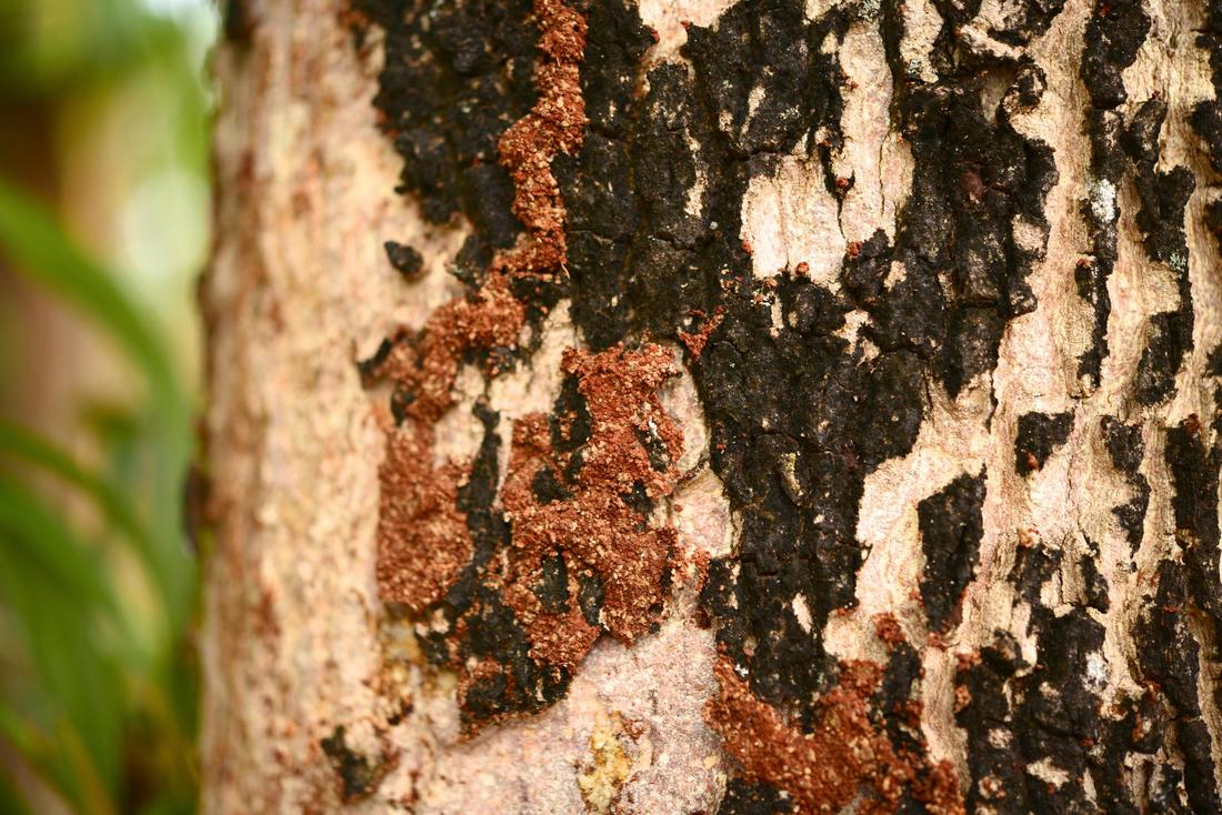 This is a picture of termites.