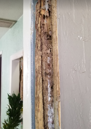Termite infestation Summerville, sc